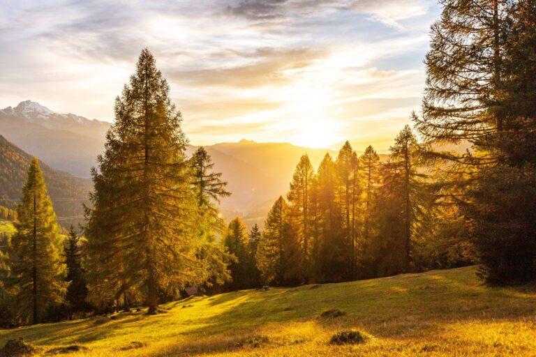 gressdekket skråning med trær på dagtid
